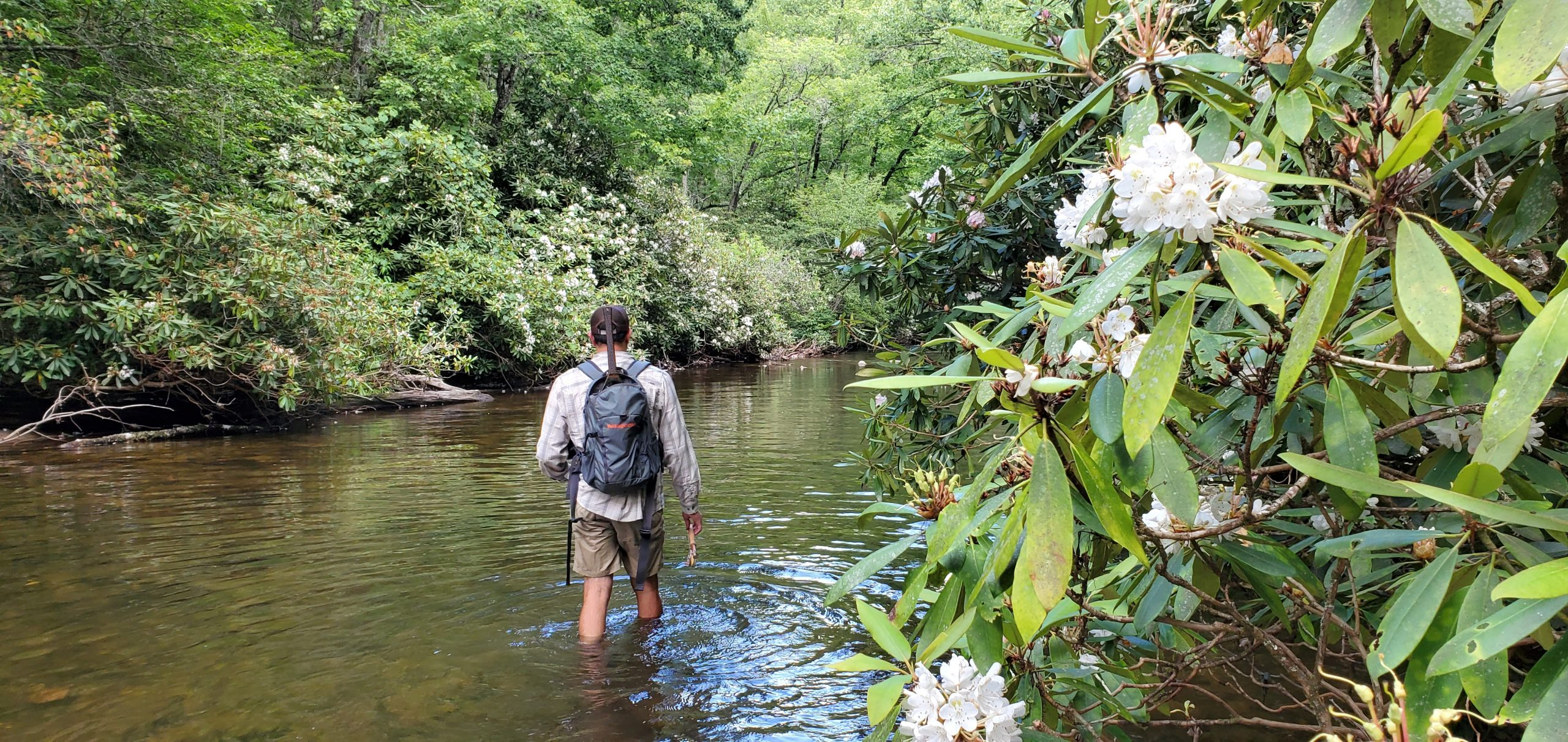 Summer Trout Tactics for WNC Mountains